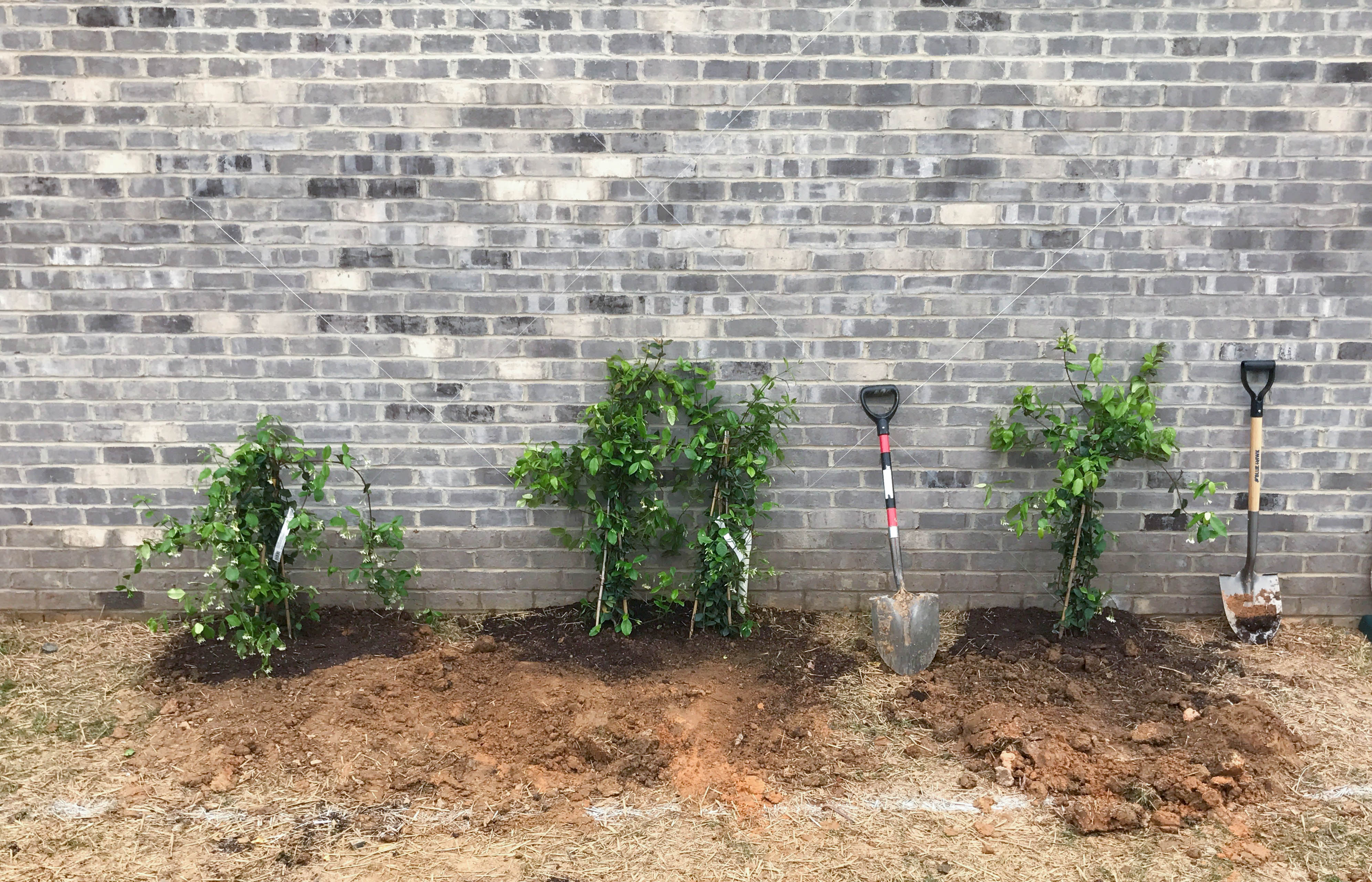 Step-by-Step Guide To Building A Garden Trellis | Style Souffle